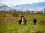 Azerbaijan, Agstafa Prov, Horse Man Cows, 2009, IMG 8690