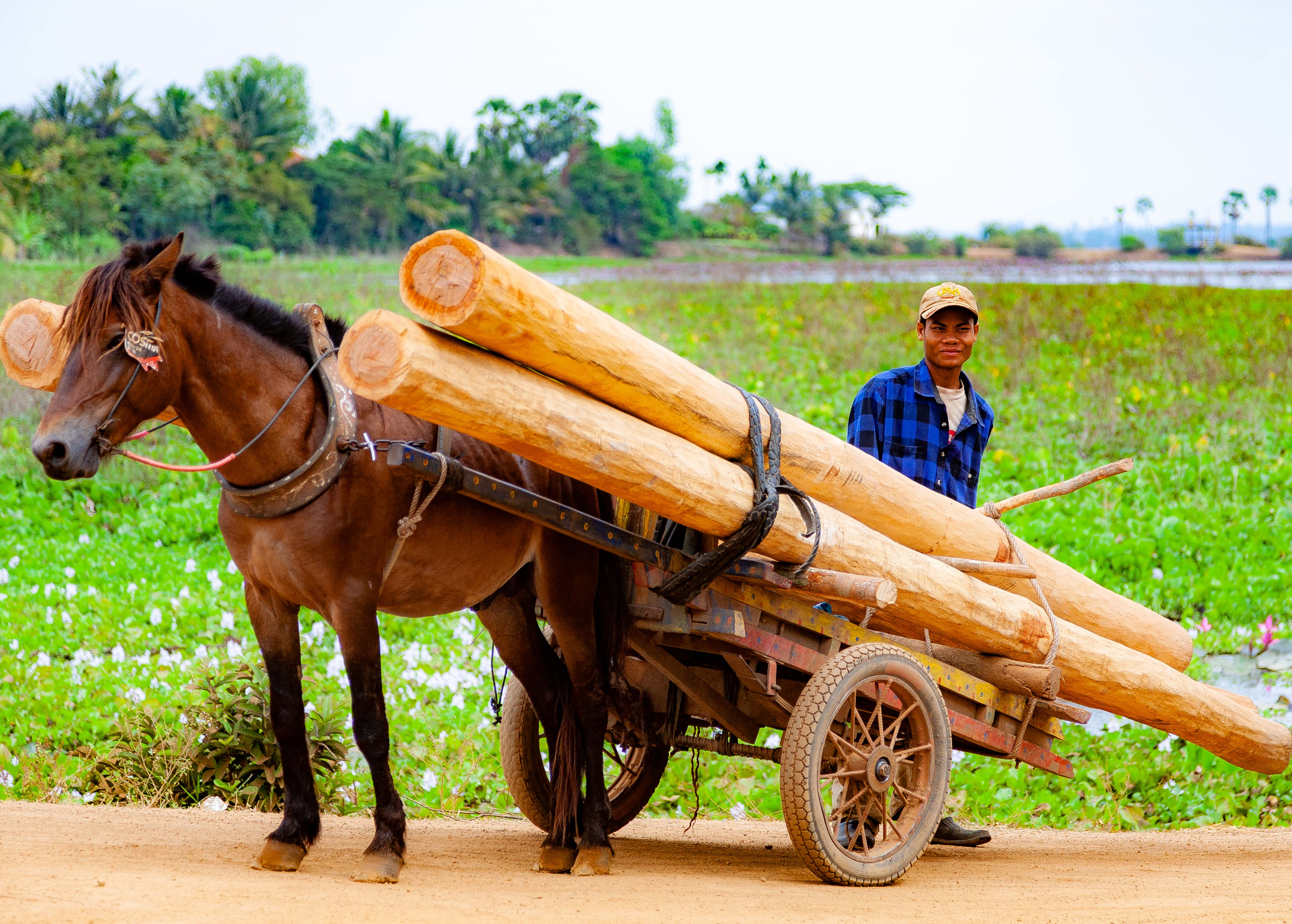 Cambodia, Kampong Chaam Prov, Horse Logging, 2010, IMG 5434