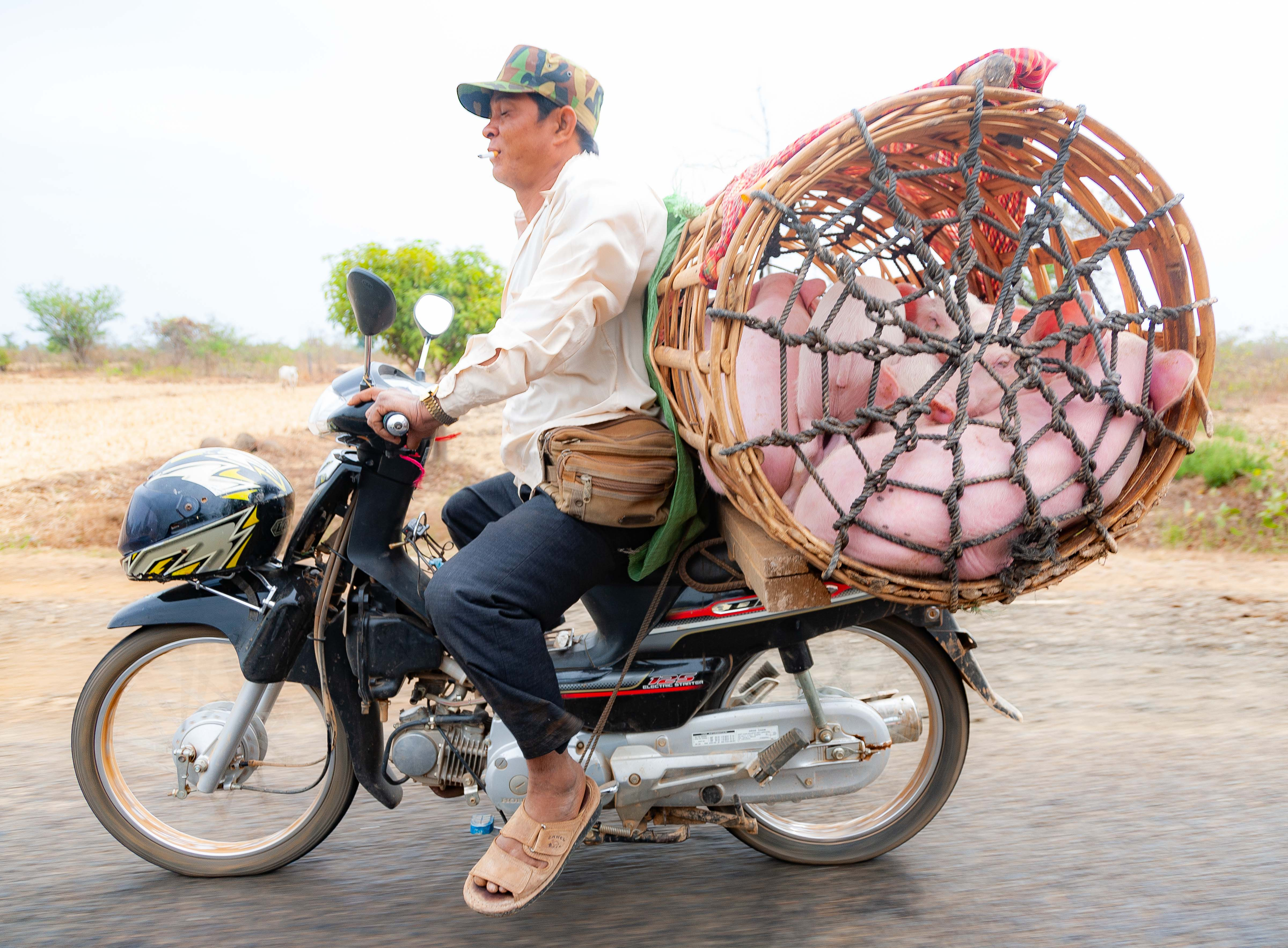 Cambodia, Kampong Chaam Prov, Pig Basket, 2010, IMG 5398