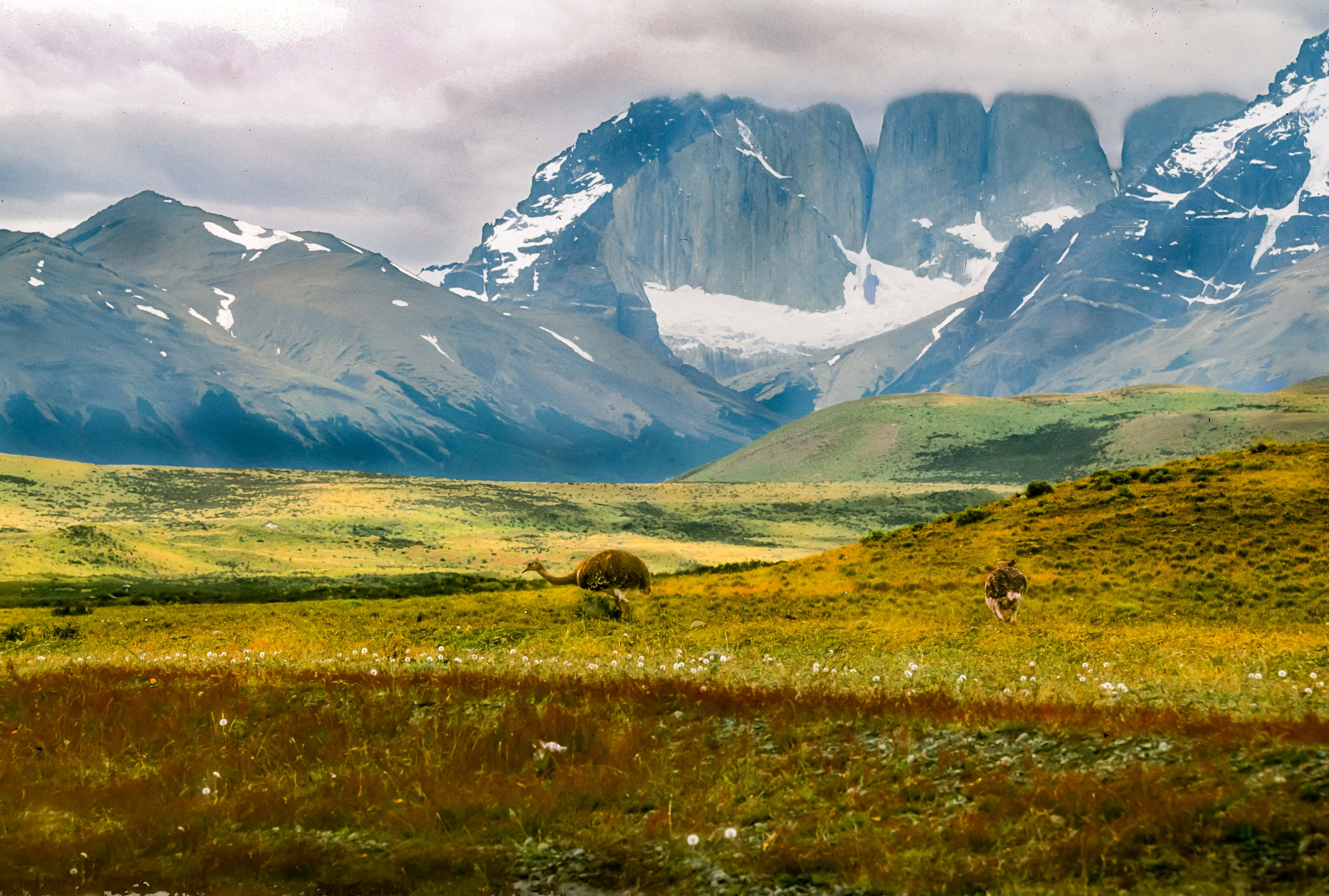 Chile, Torres Del Paine, Rhea And Towers, 2004