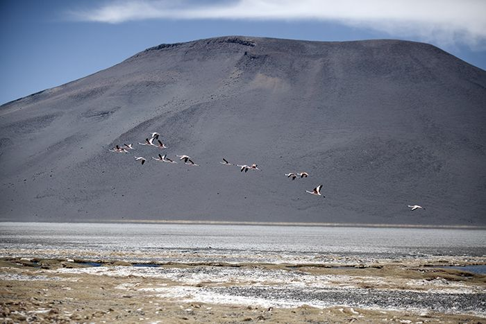 Chile, Antofagasta Prov, Flamingo Mountain, 2010, IMG 4161