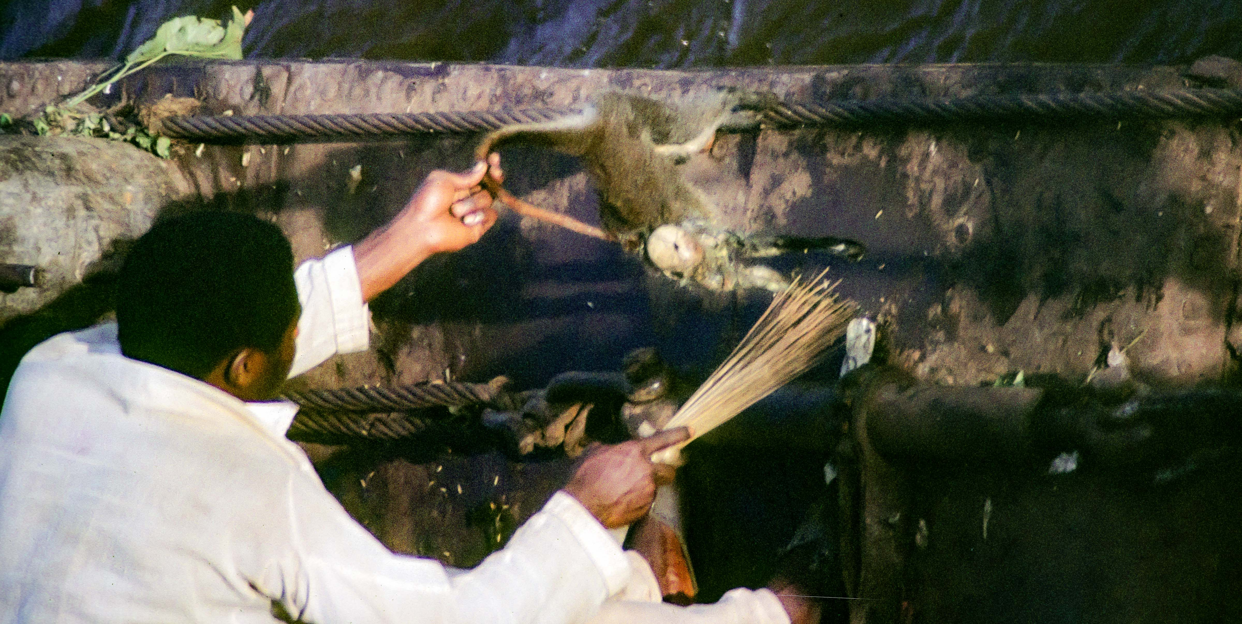 Congo Zaire, Sweeping Maggots off a Monkey (to Eat), 1984