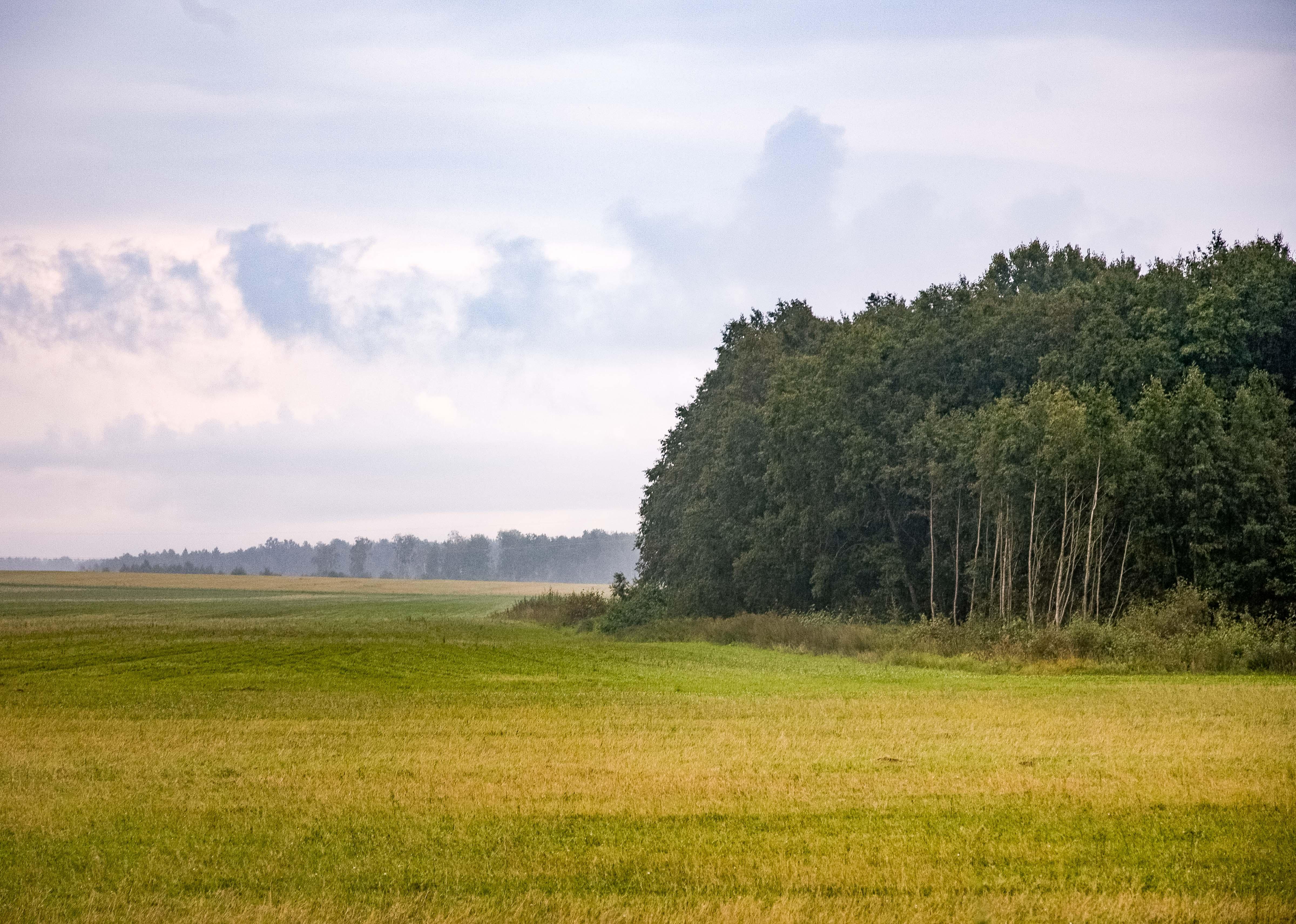 Estonia, Jarvamaa Prov, Landscape, 2010, IMG_1317