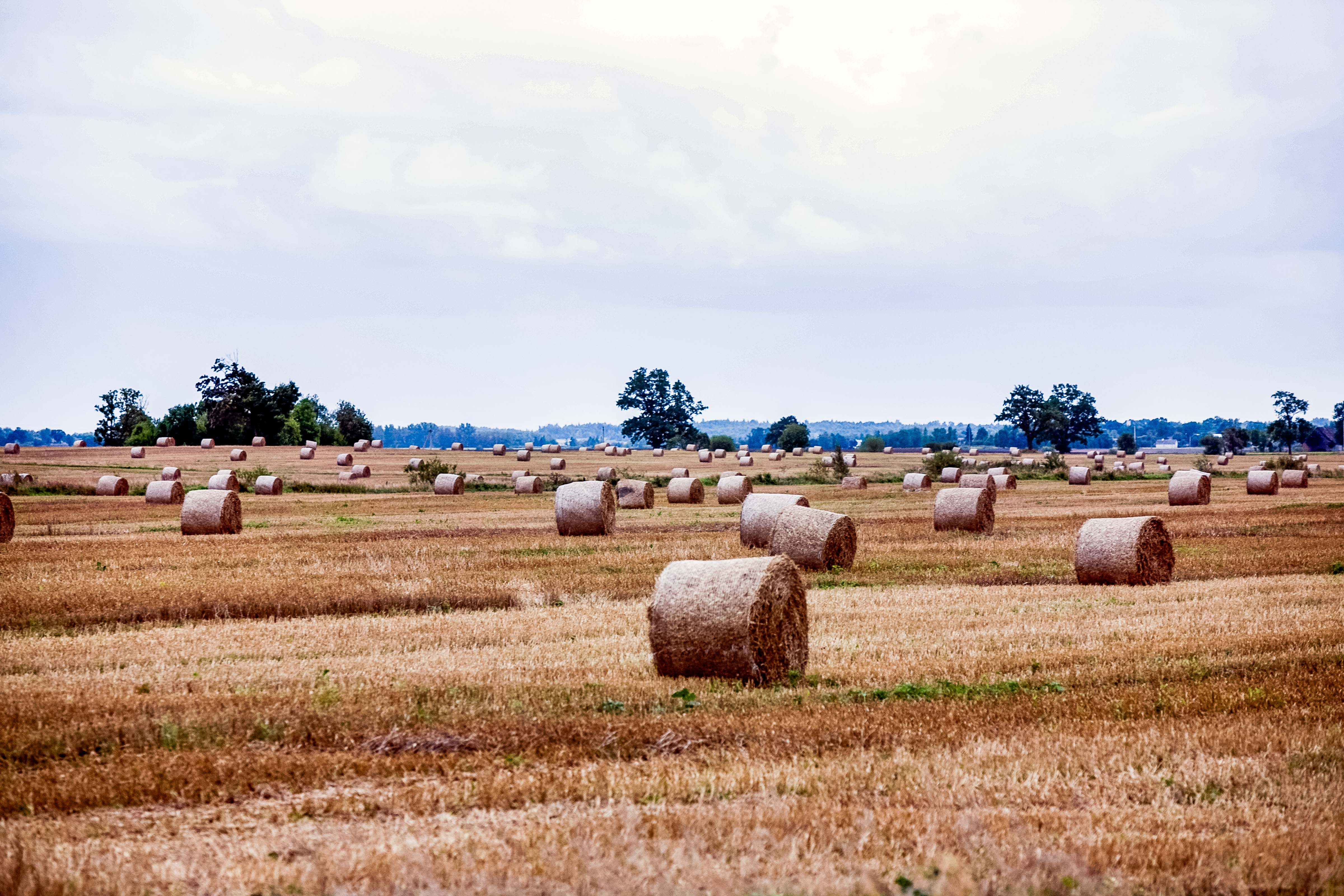 Lithuania, Panevezio Prov, Field And Hay, 2010, IMG_2799