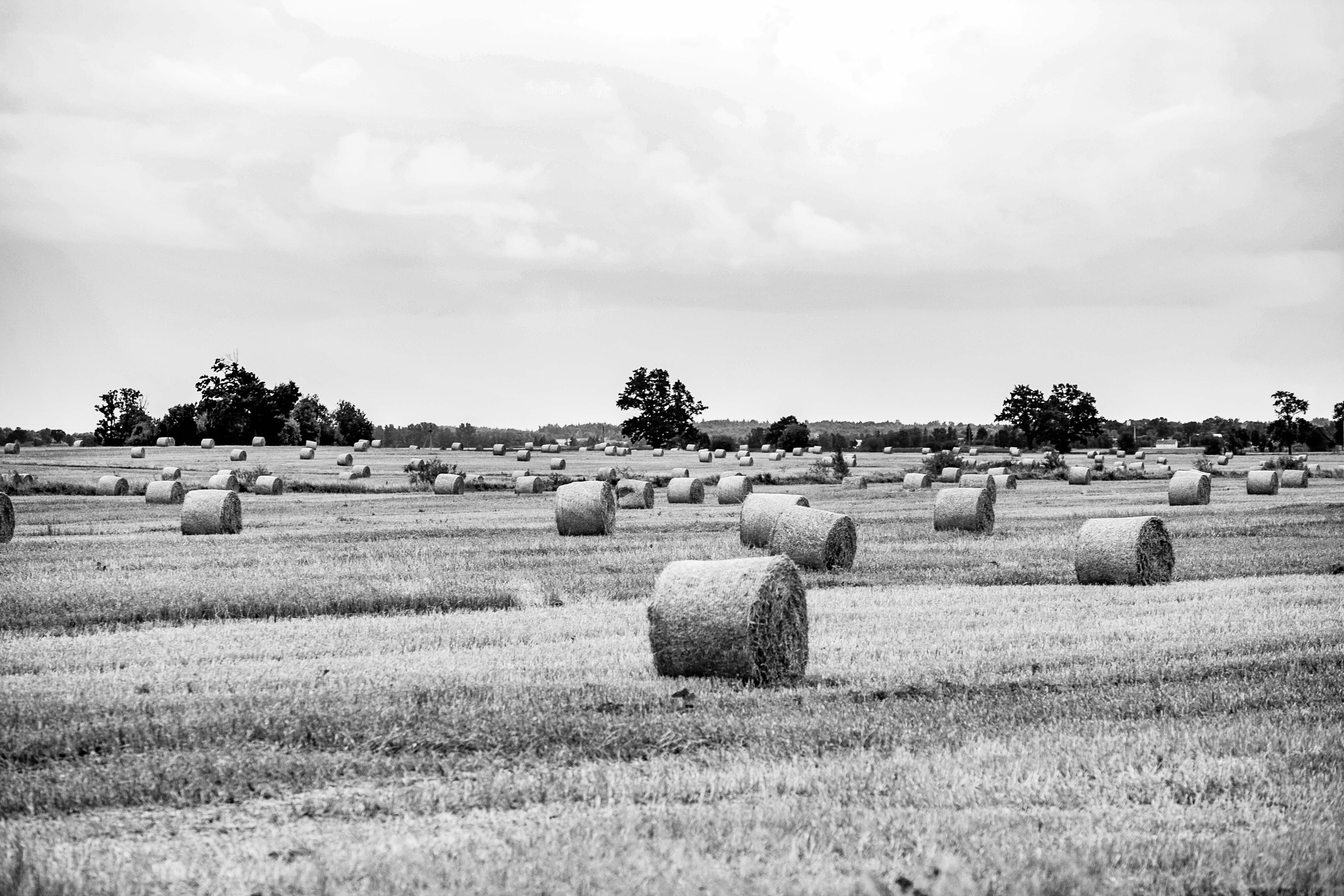 Lithuania, Panevezio Prov, Field And Hay, 2010, IMG_2799 B W