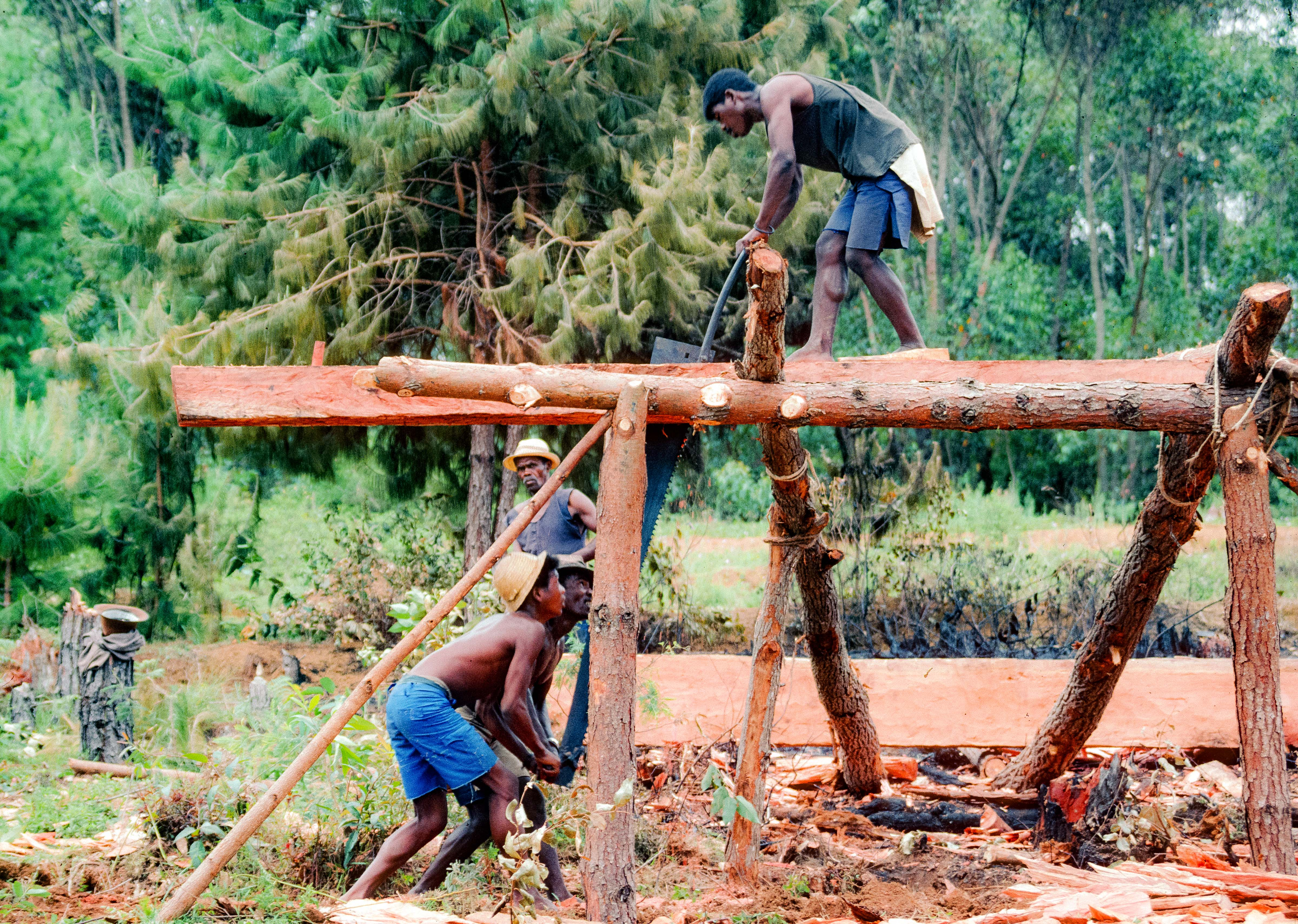 Madagascar, Woodcutters, 2003