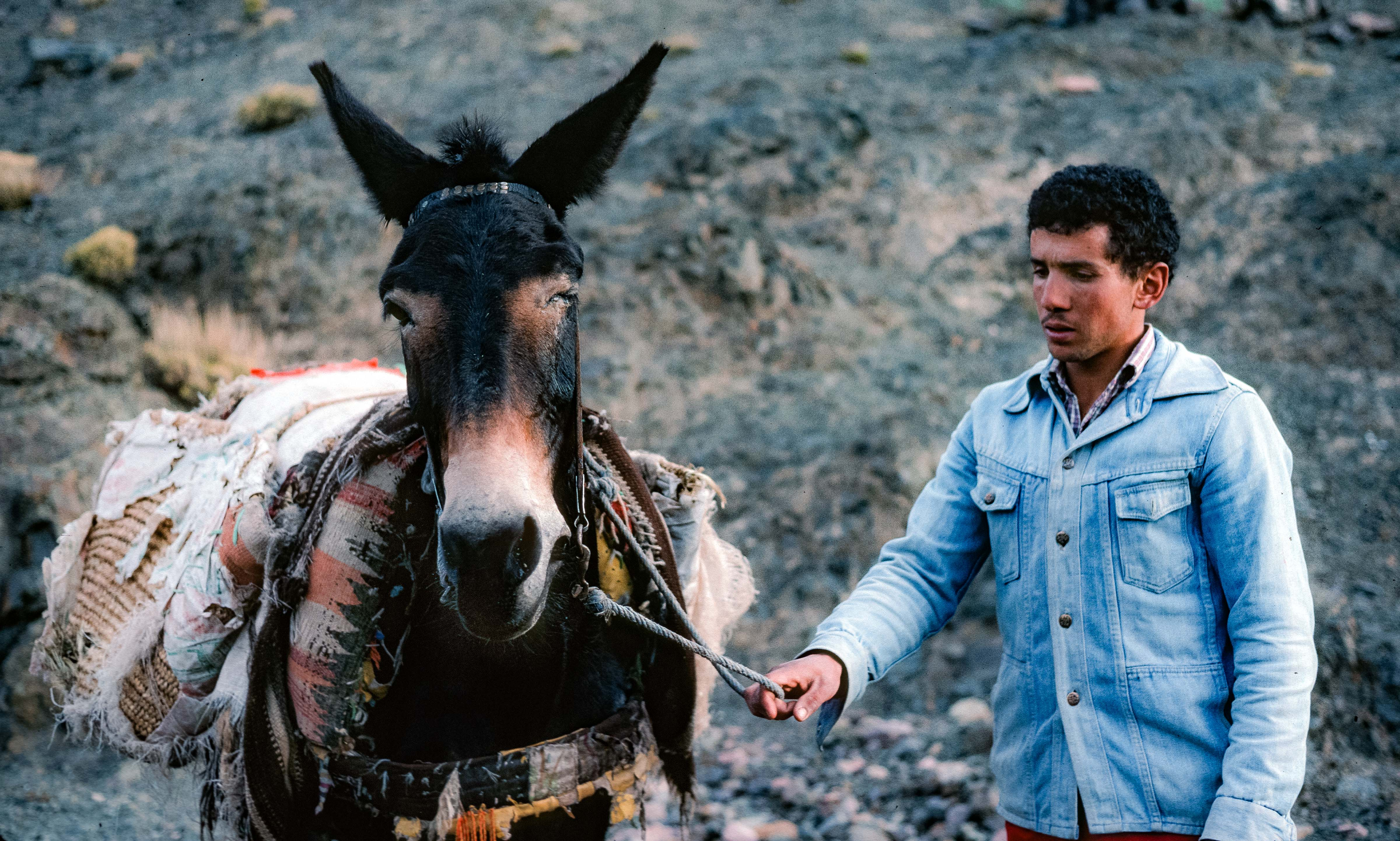 Morocco, Burro And Berber Man, 1988