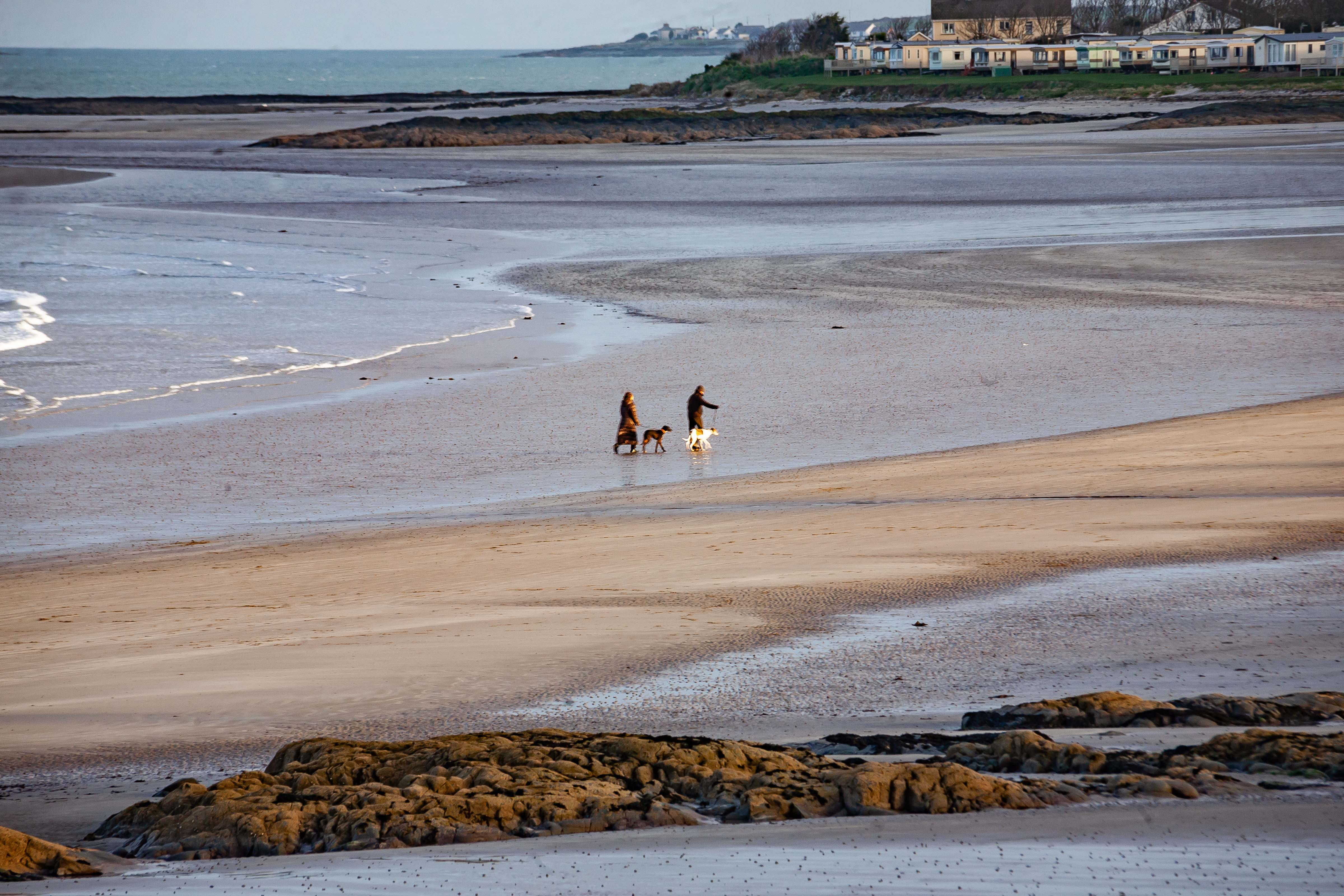 N Ireland, Ards Prov, Walking Dogs Beach, 2009, IMG 9971