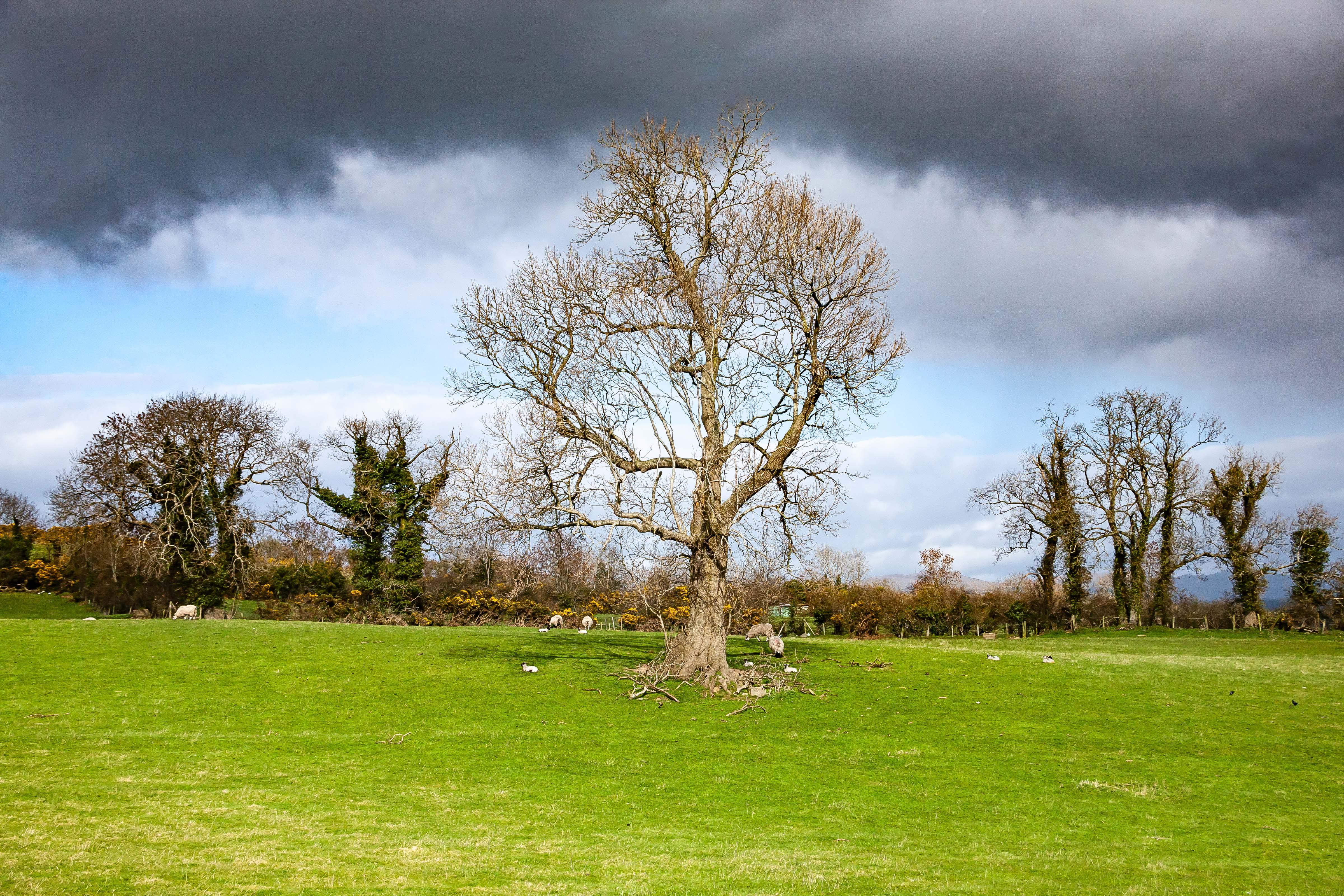N Ireland, Banbridge Prov, Tree, 2009, IMG 9891
