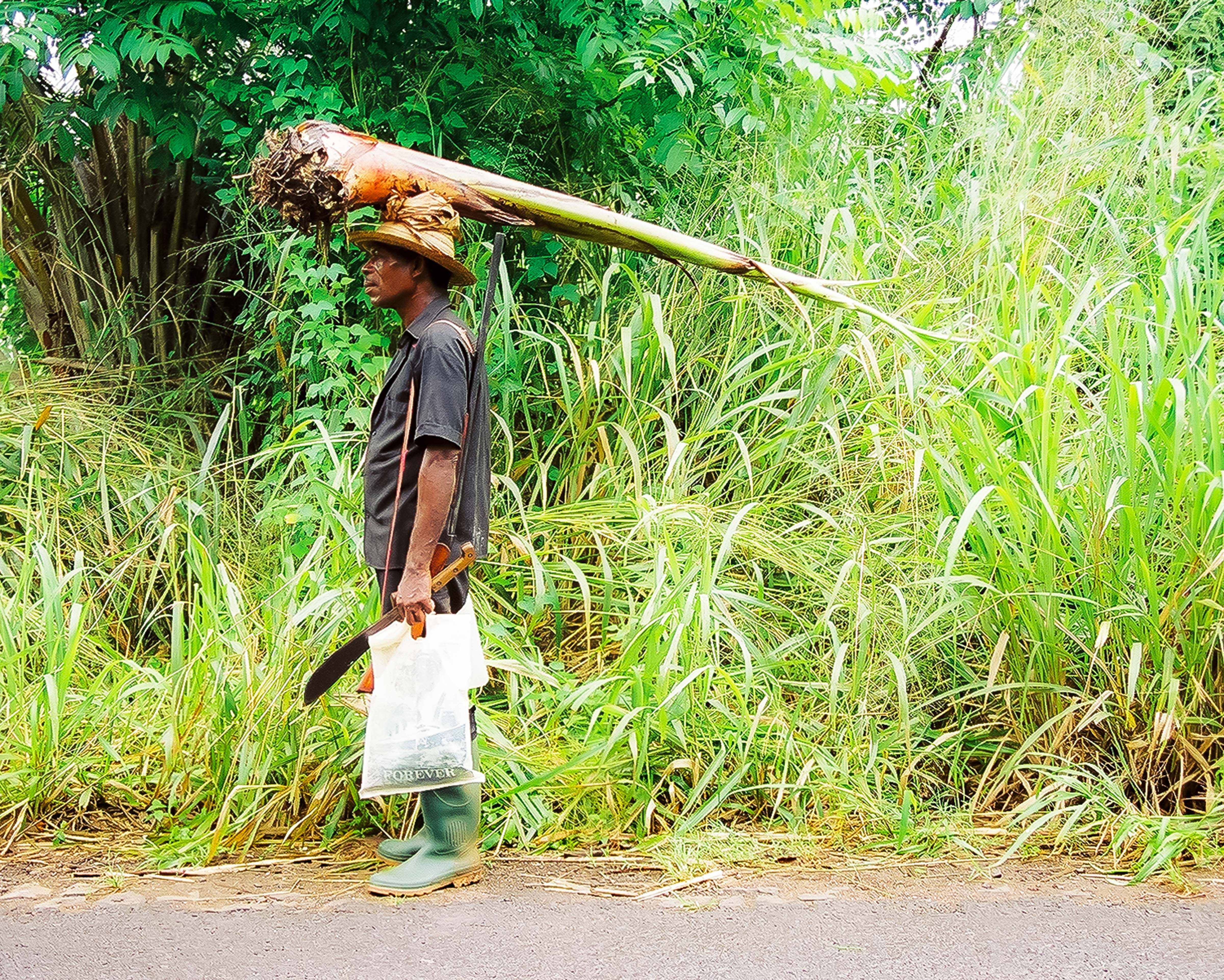 Sao Tome, Man With Tree On His Head, 2000