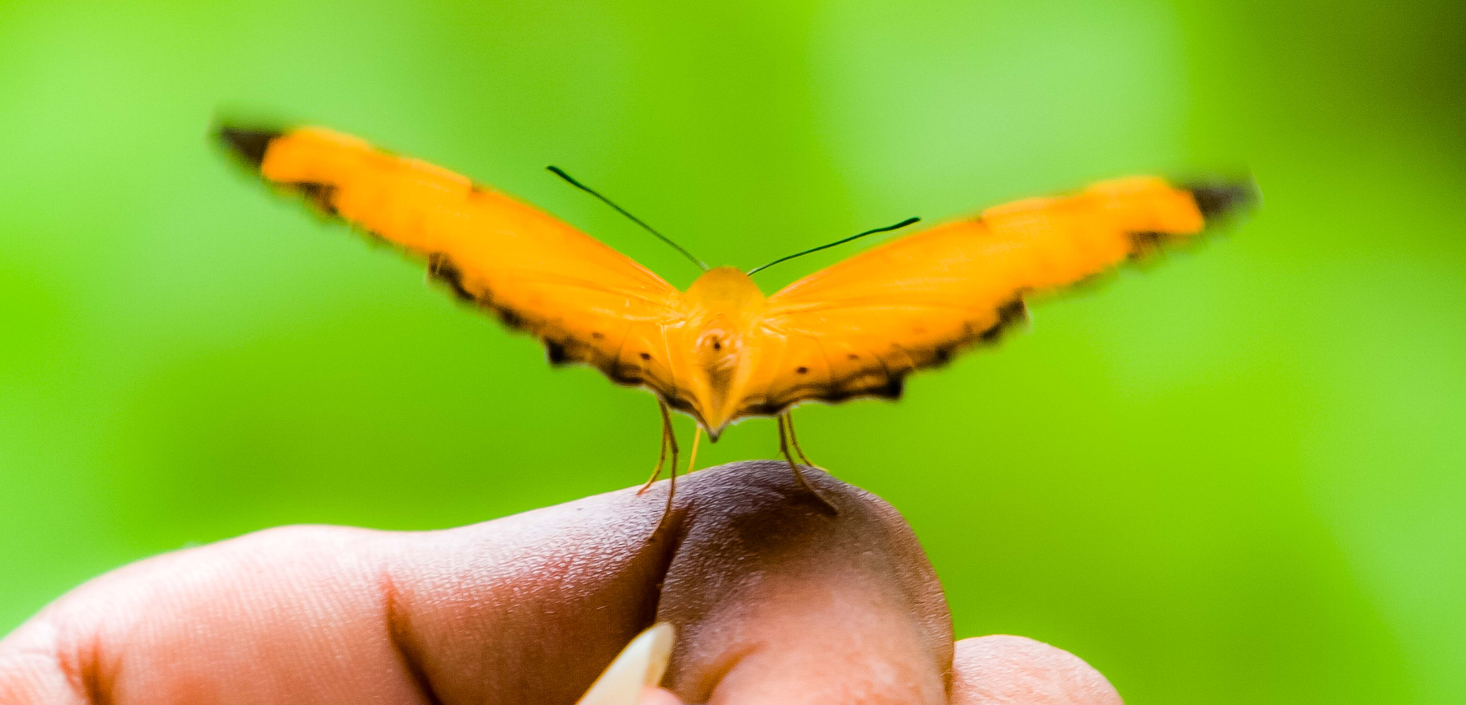 Seram, Orange Butterfly On Finger, 2006