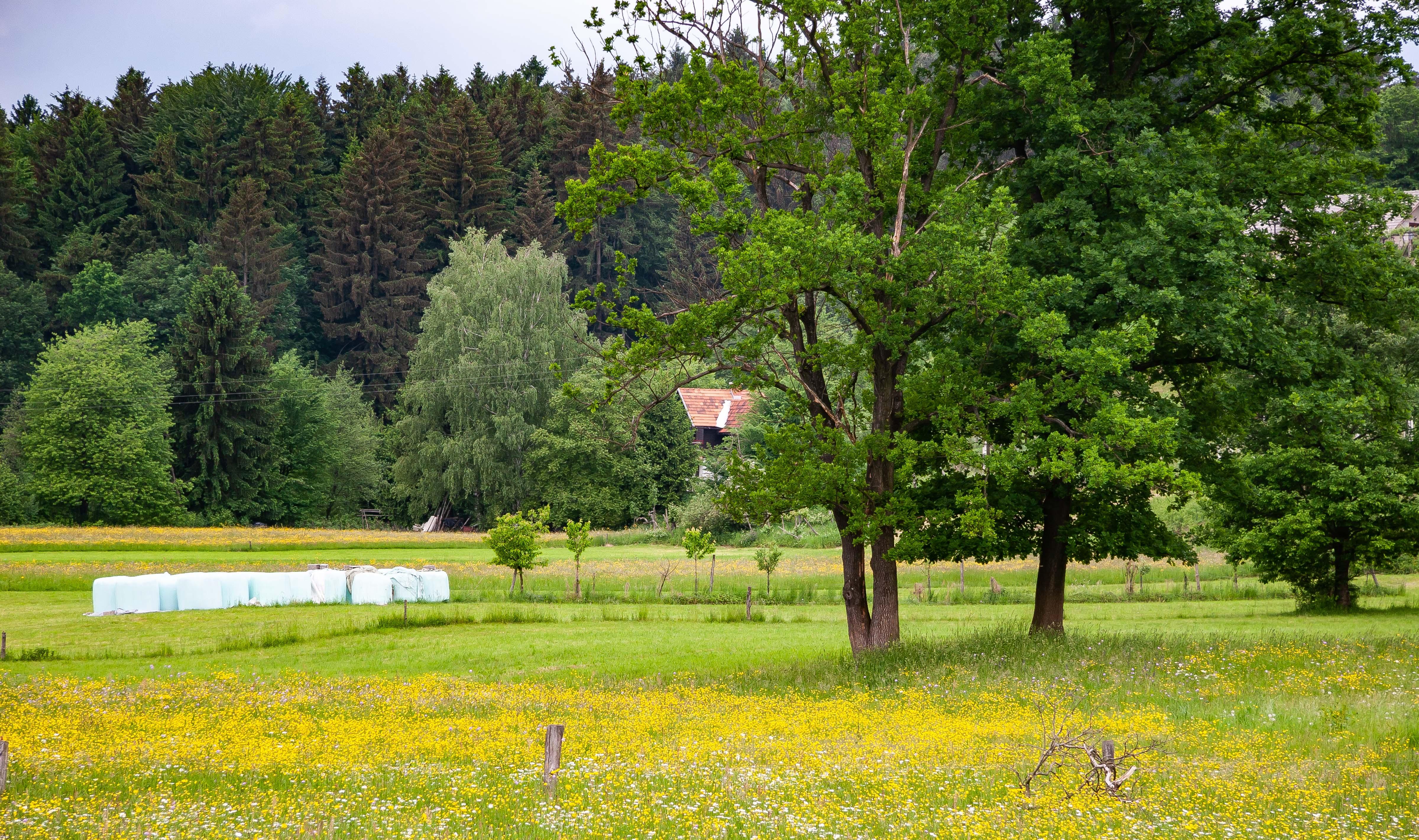 Slovenia, Braslovce Prov, Farm, 2006, IMG 8162