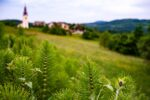 Slovenia,_Kozje_Prov,_Bug_Before_Village,_2006,_IMG_8043