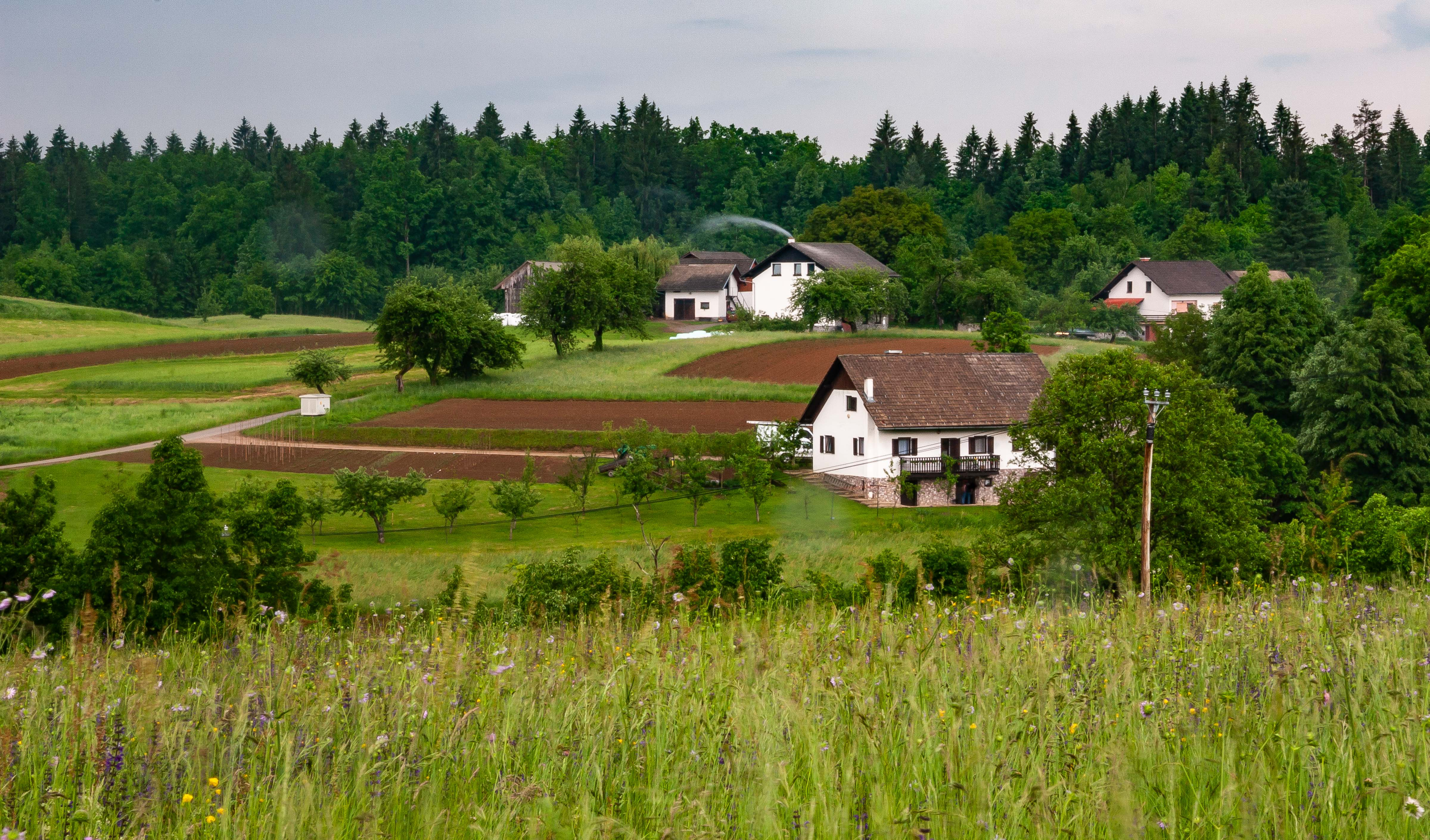 Slovenia, Metlika Prov, Village, 2006, IMG 7364