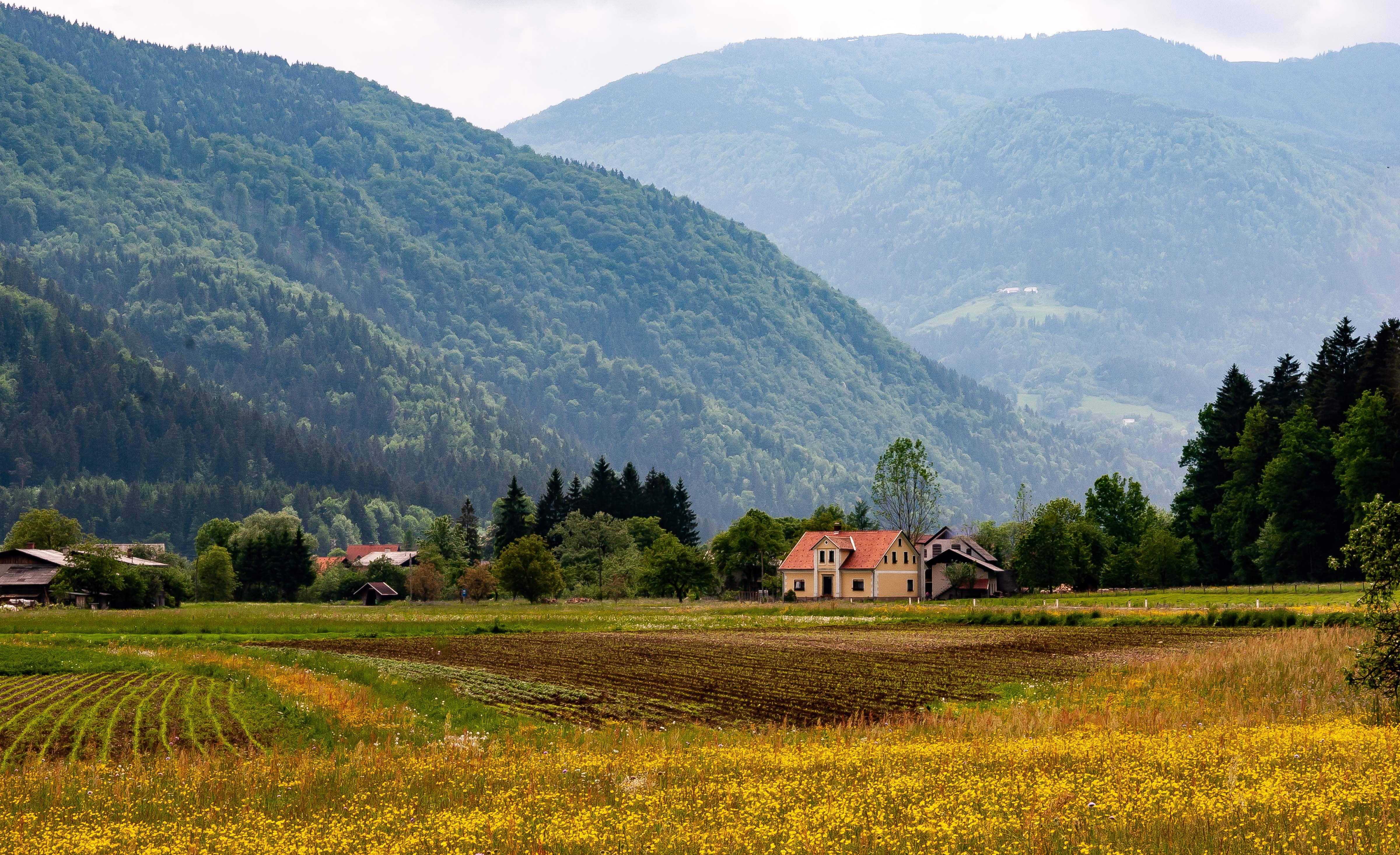 Slovenia, Nazarje Prov, Pastoral Scene, 2006, IMG 8261