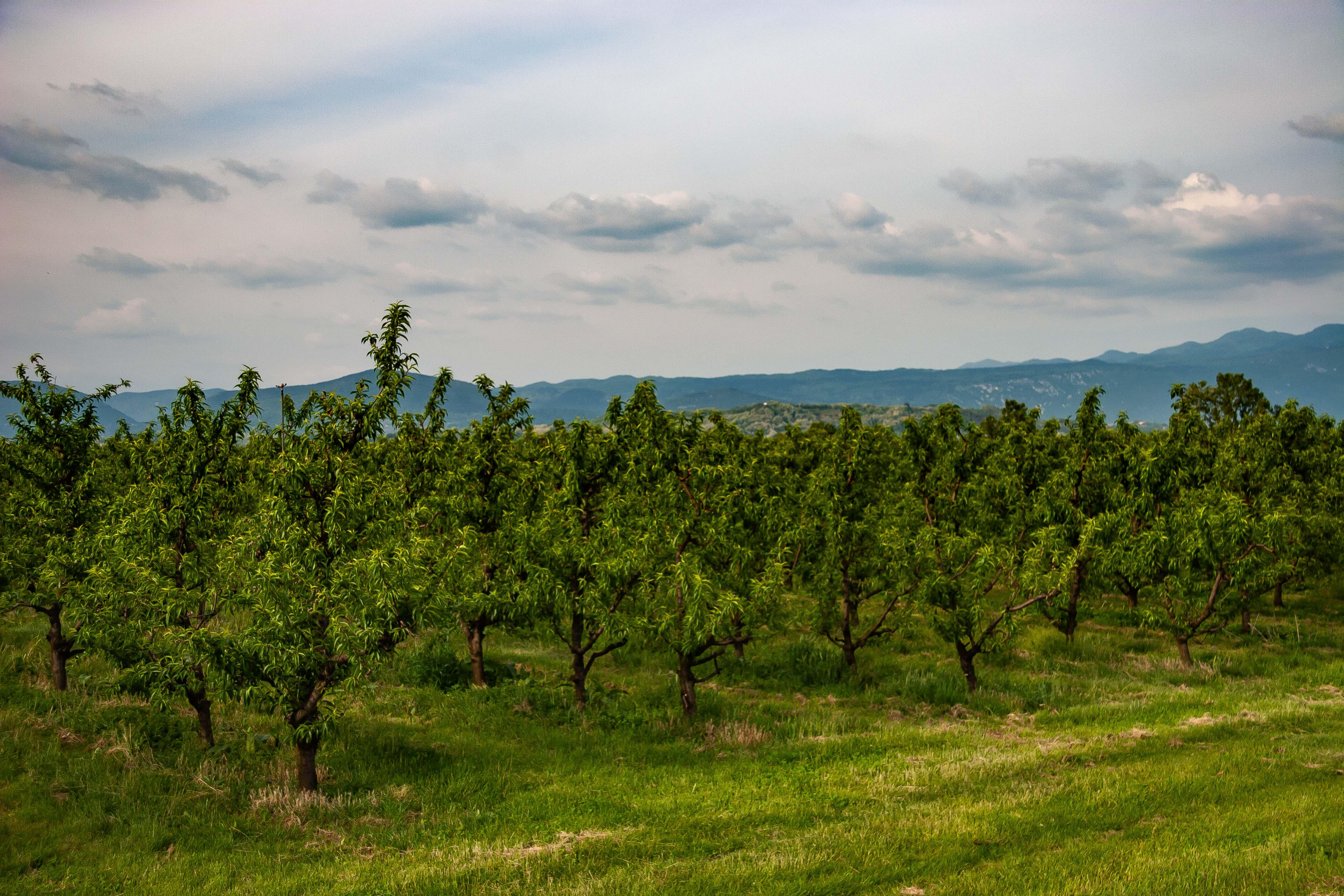Slovenia, Sempeter-Vrtojba Prov, Grove, 2006, IMG 6788