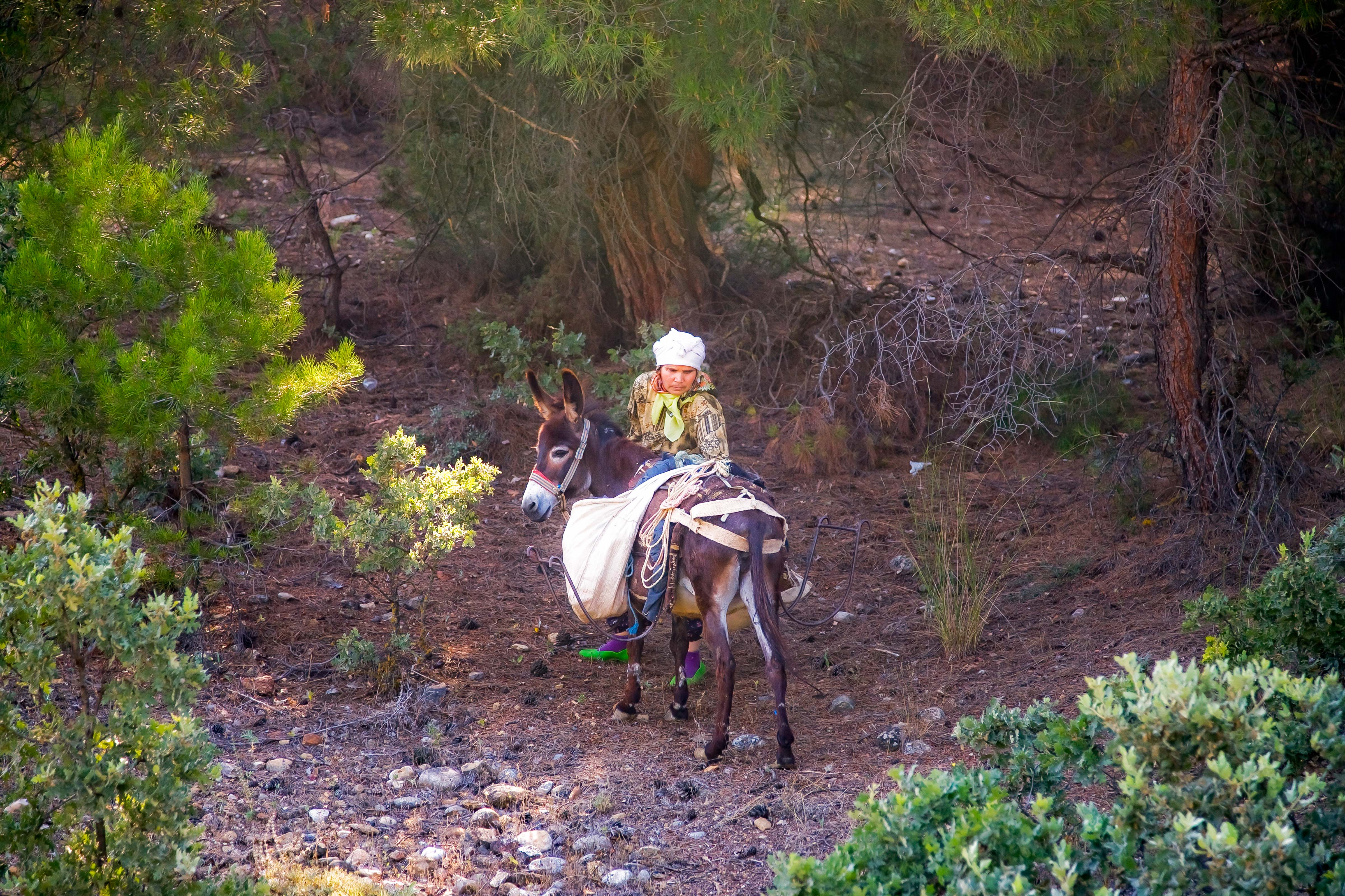Turkey, Kutahya Prov, Gypsy Woman With Donkey, 2010, IMG 9880