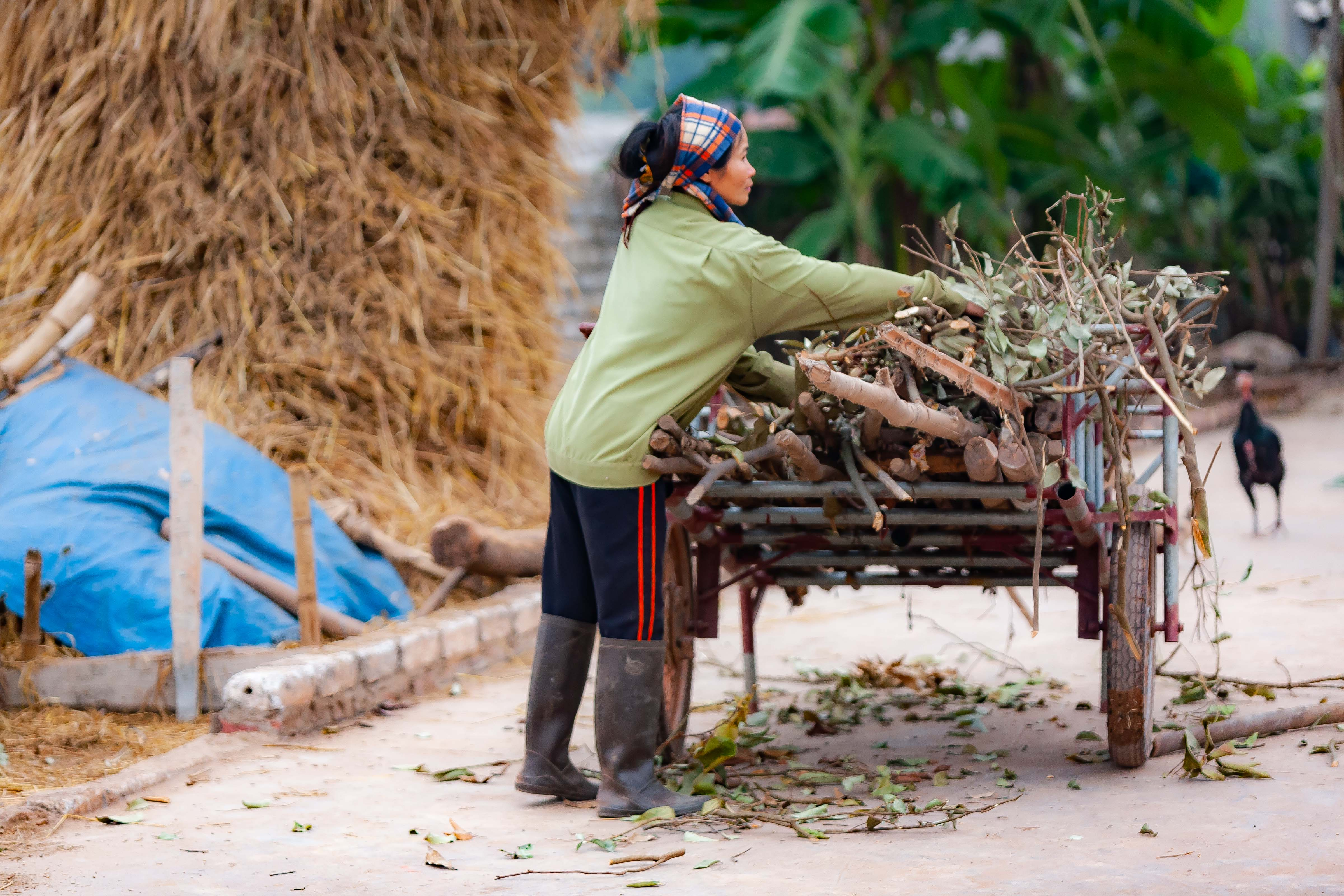 Vietnam, Bac Giang Prov, Wood Cart, 2010, IMG 4434