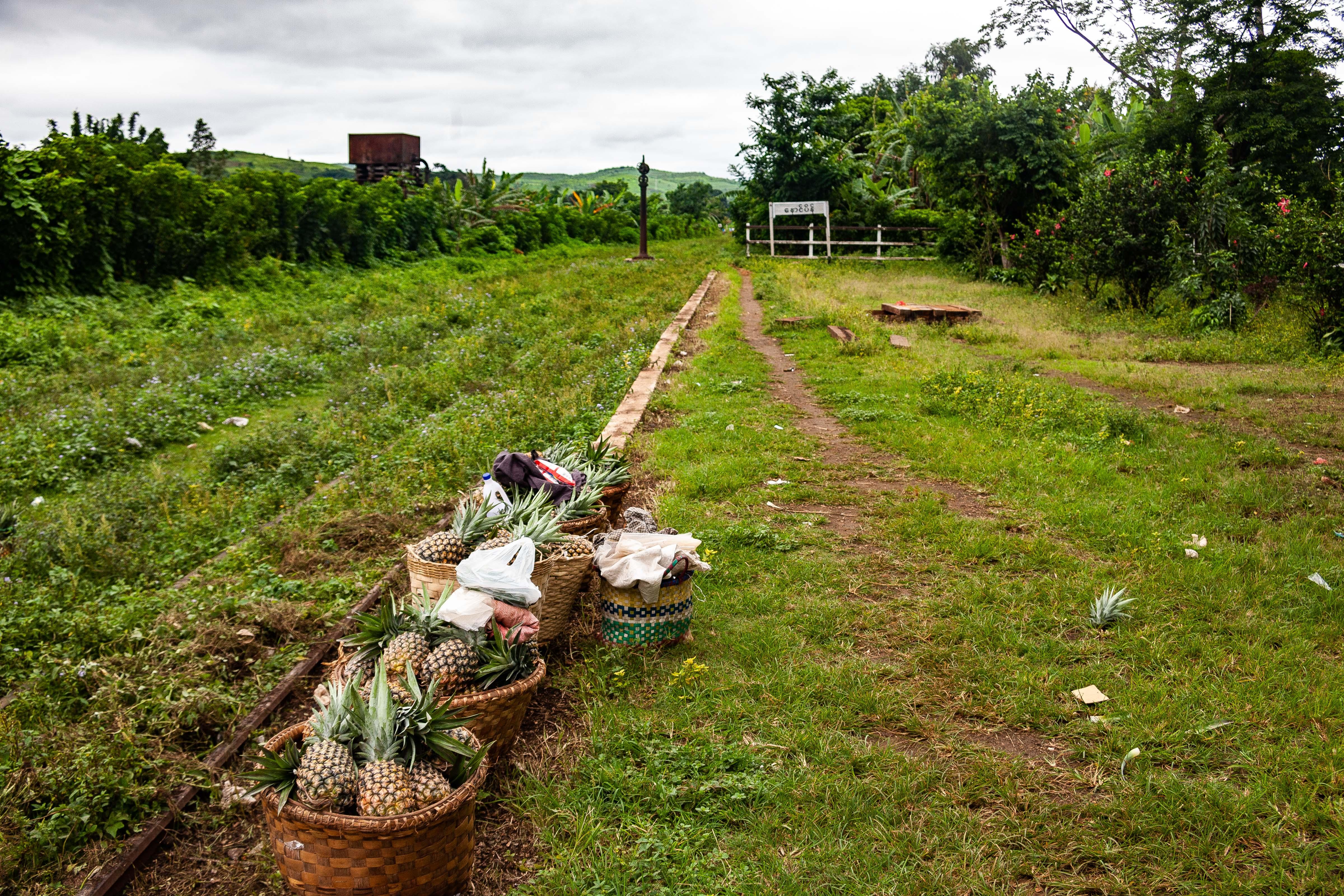 Myanmar, Shan Prov, Pineapples, 2009, IMG 4509