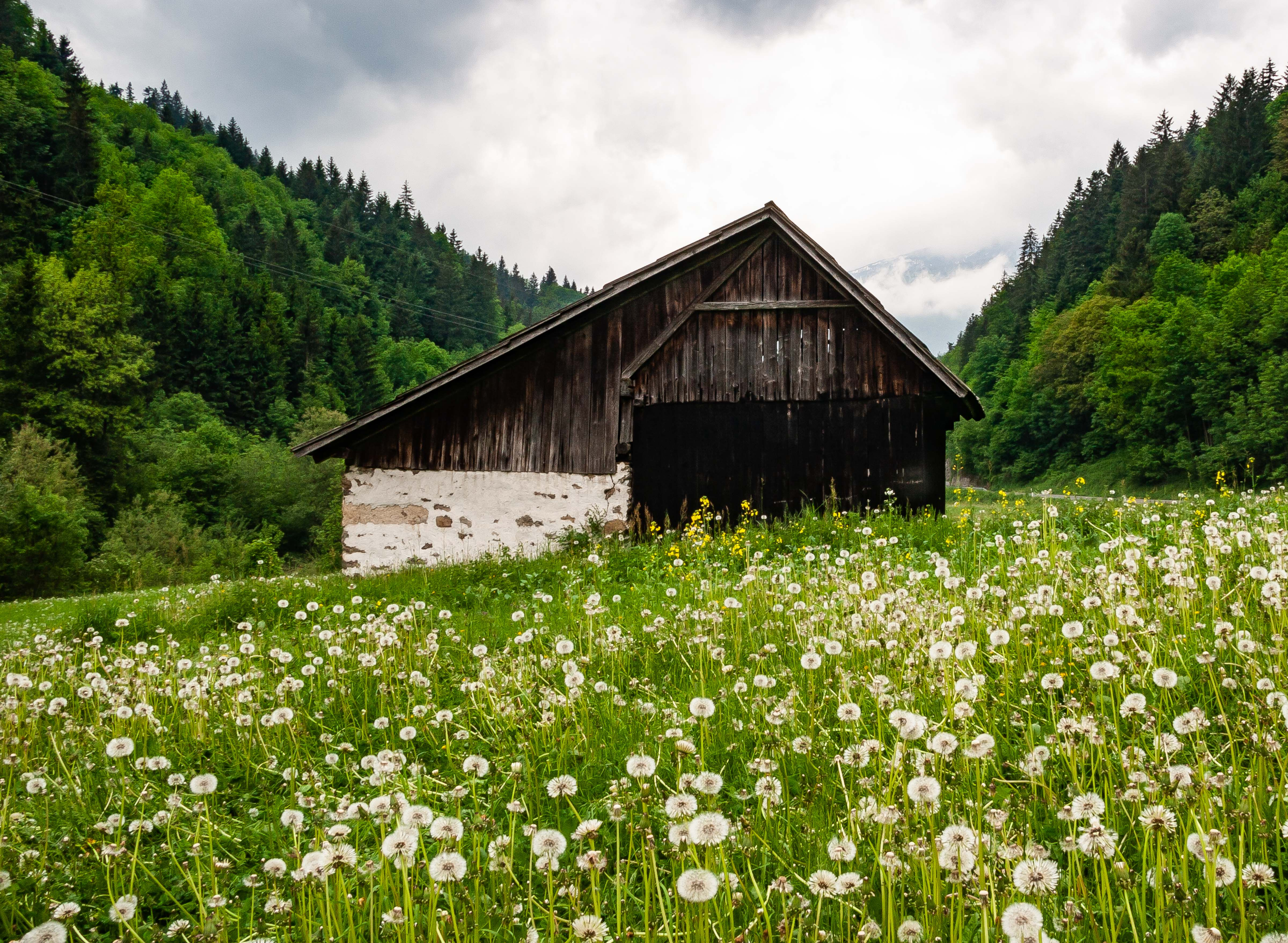 Slovenia, Luce Prov, Blow Brush Field And Old Building, 2006, IMG 8362