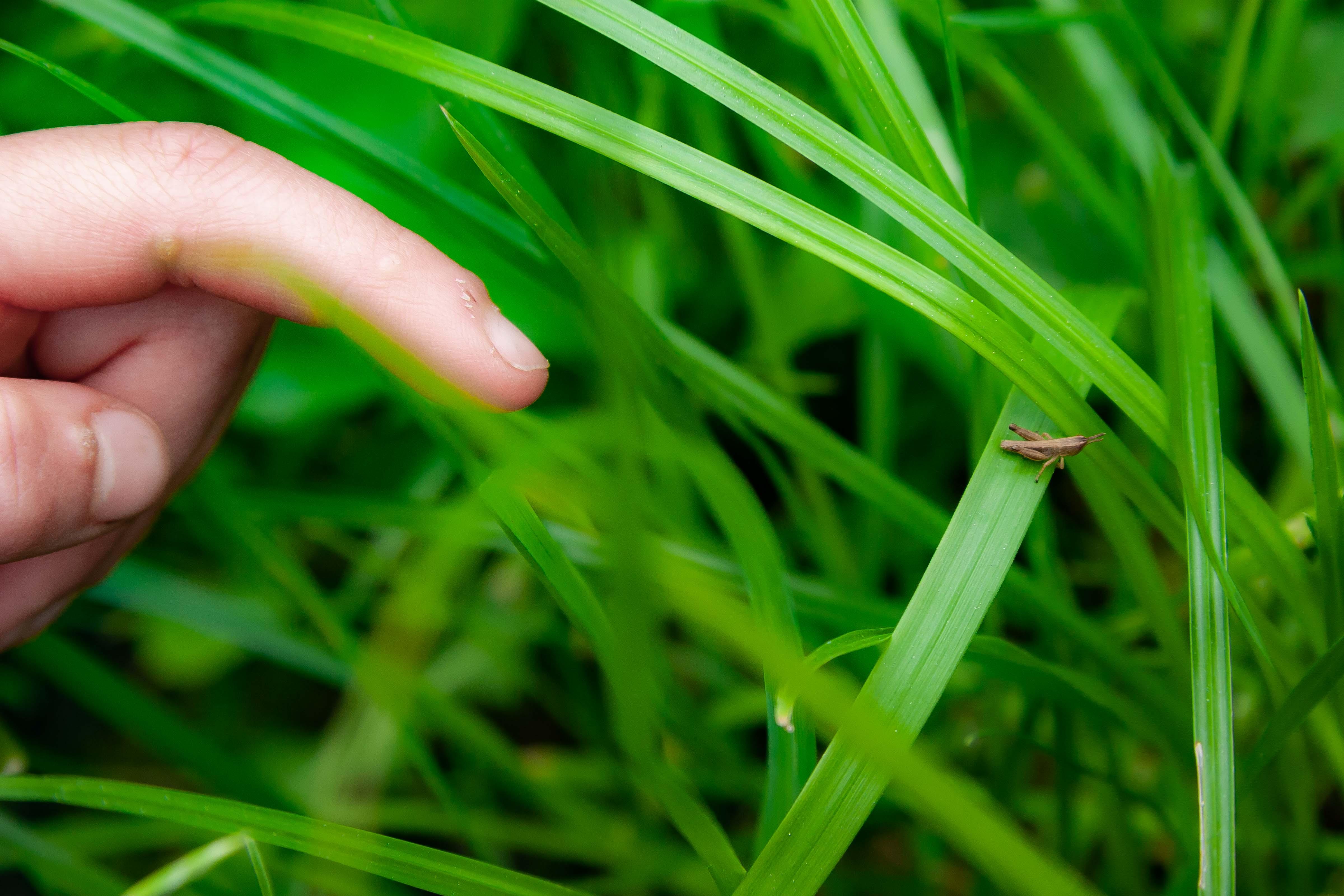Slovenia, Sentjur Prov, Grasshopper And Child Finger, 2006, IMG 7883