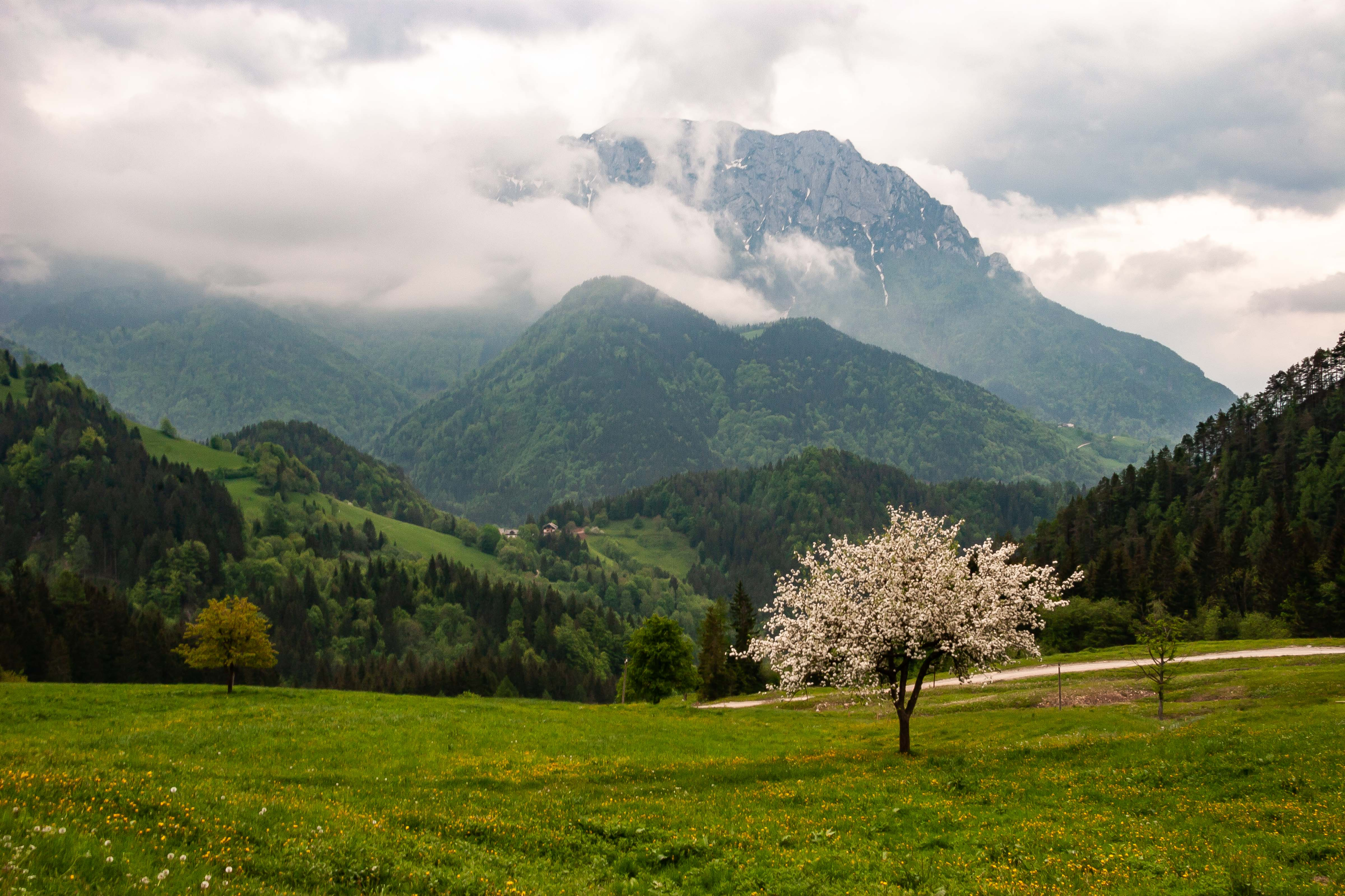 Slovenia, Solcava Prov, Blossoming Tree And Mountain, 2006, IMG 8418