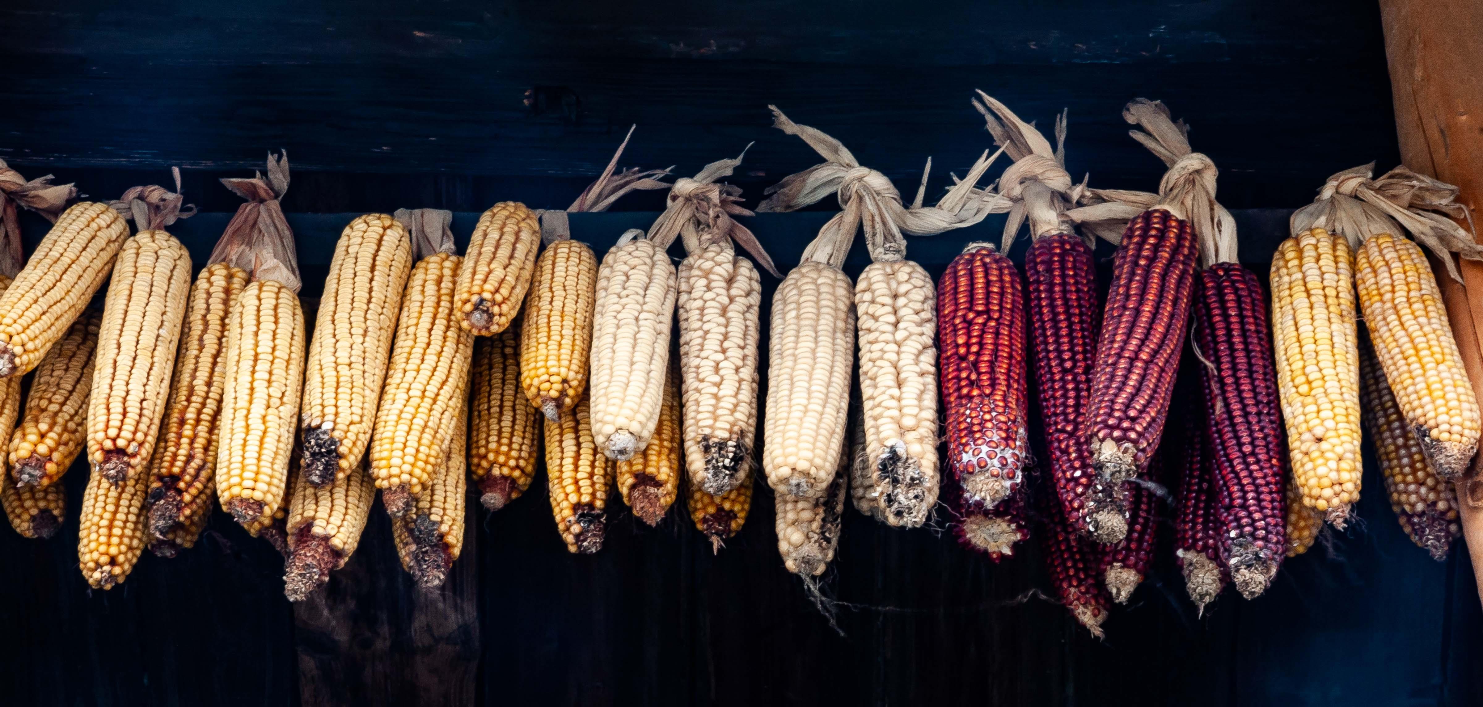 Slovenia, Tabor Prov, Hanging Corn, 2006, IMG 7770