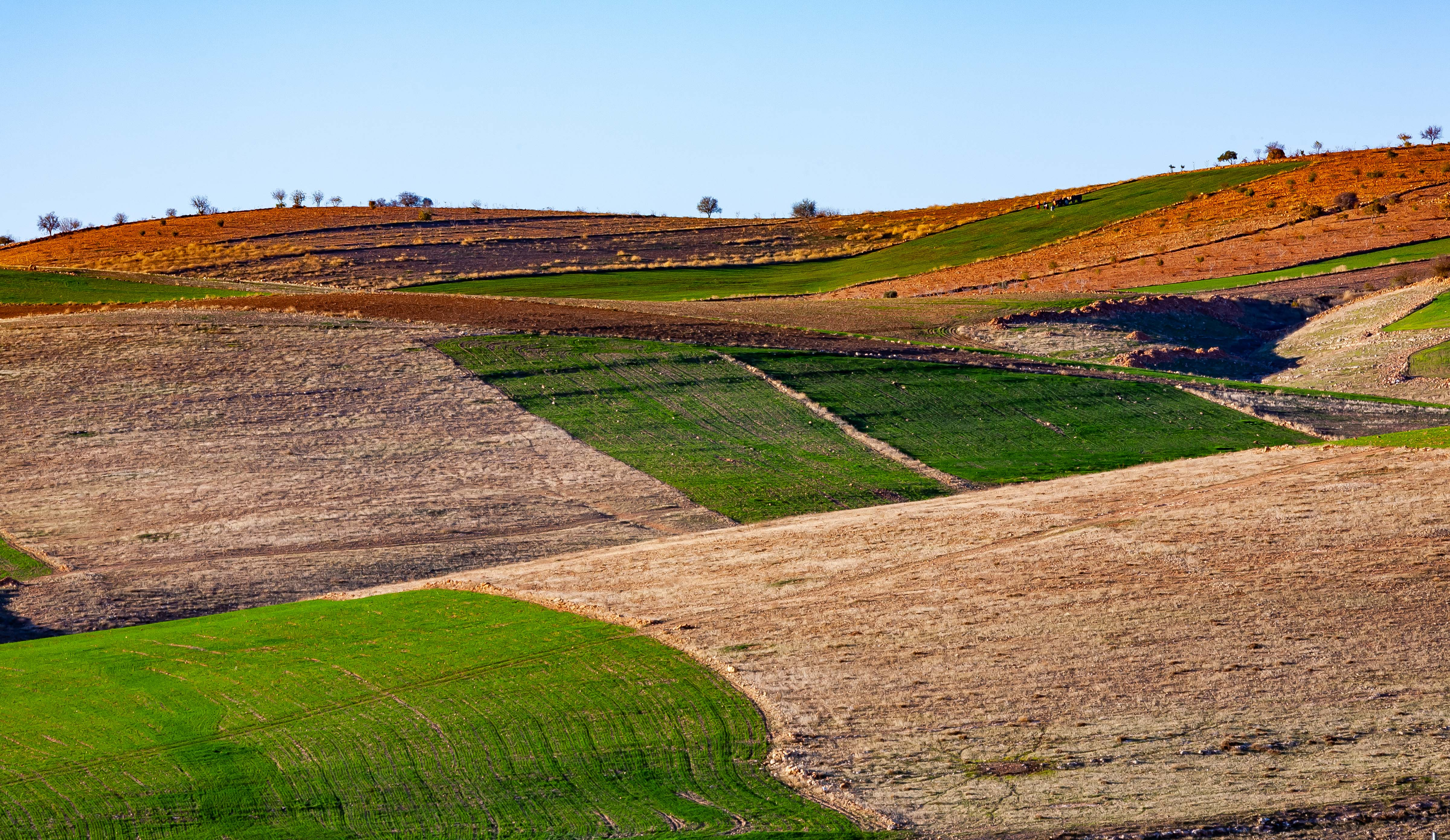 Turkey, Sanliurfa Prov, Fields, 2009, IMG 1637
