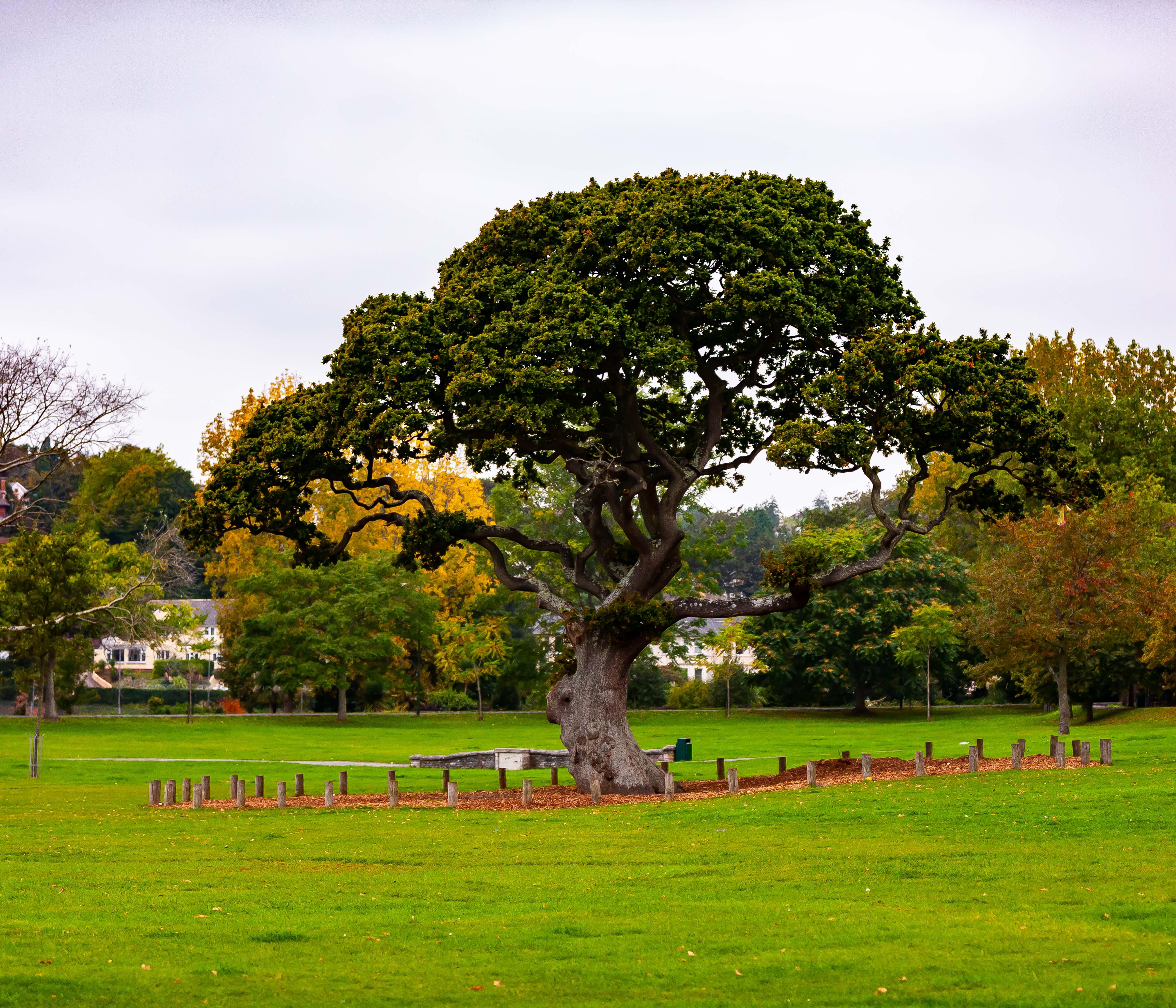 UK, Devon Prov, Tree, 2009, IMG 4422